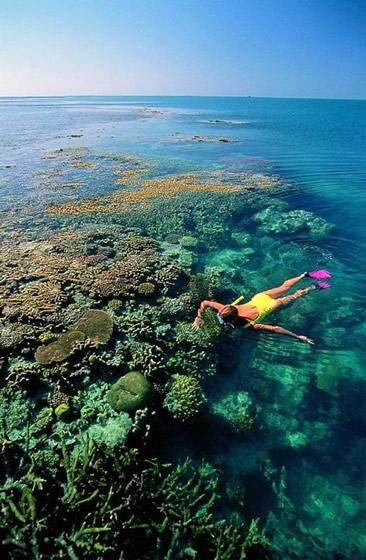 Snorkeling Great Barrier Reef, Australia