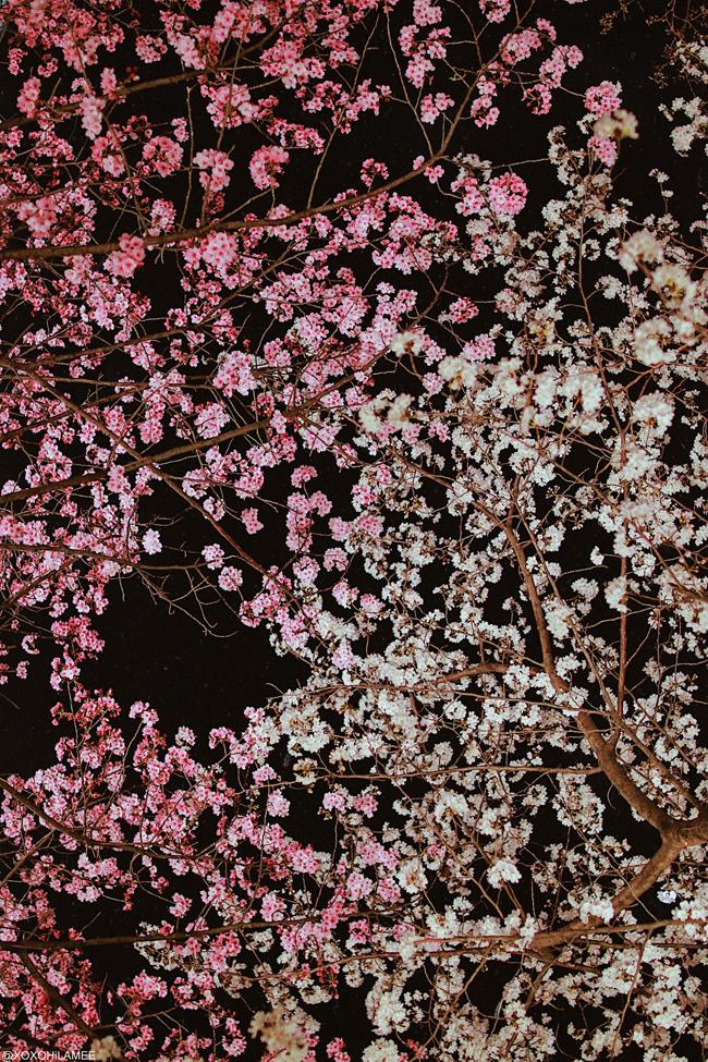 Japanese Fashion/lifestyle blogger,MizuhoK,LIFE STYLE || 2 MONTH UPDATE  [2/6] SAKURA