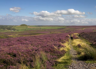 Heath on the North York Moors.