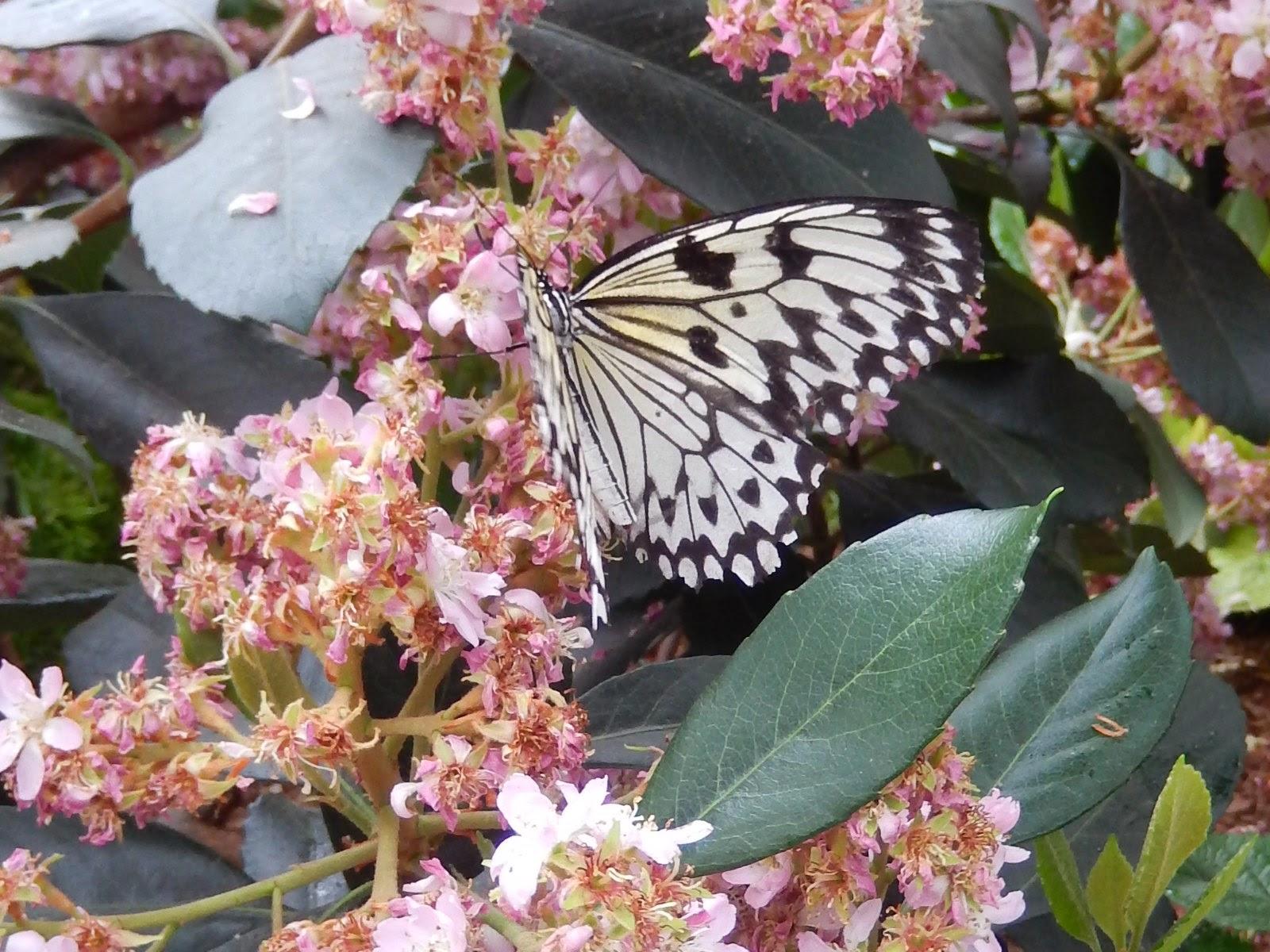 Milien et les chipmunks exposition des papillons au for Papillon jardin botanique 2015