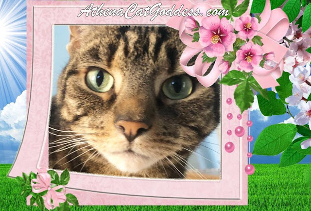 tabby cat spring graphic