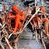 Ritual Menyeramkan Mumifikasi Suku Angga di Papua Nugini