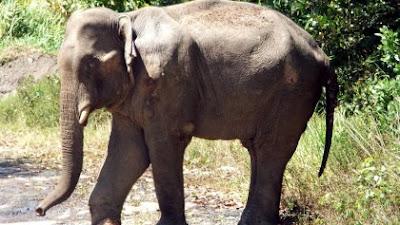 Zimbabwe Menjual 100 Ekor Gajah ke Cina