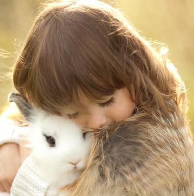 rabbit illness