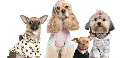 Comportamiento perros tolerancia amor