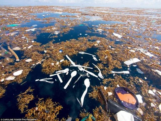 Una buzo publica imágenes del plástico en el mar Caribe
