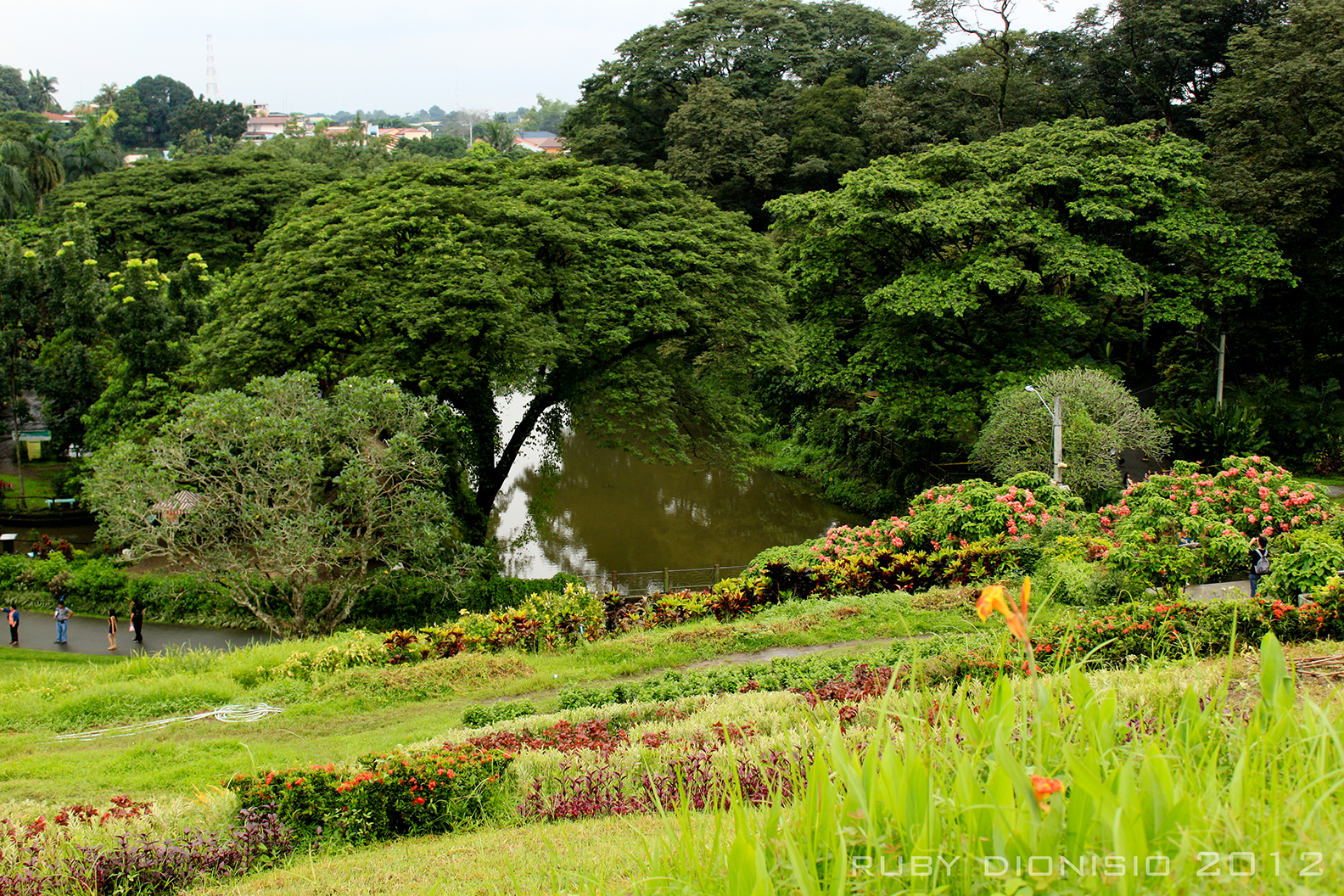 Philippines 21st century parks la mesa ecopark - La mesa eco park swimming pool photos ...