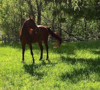 Neeko horse pasture