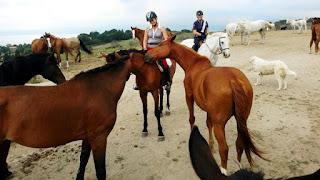 Horsexplore, riitta reissaa, italia, ratsastusmatkailu