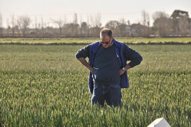 Lane examining field iris