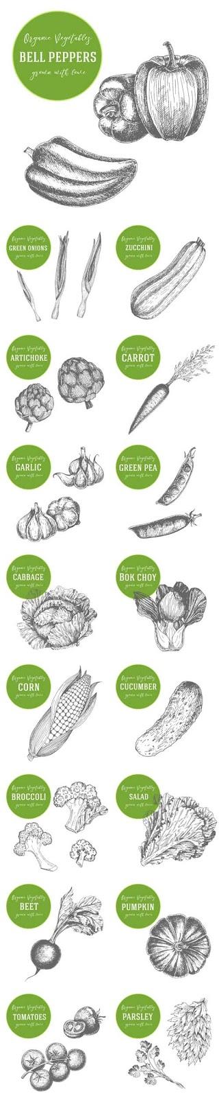تحميل فيكتور خضراوات مرسومة جودة عالية
