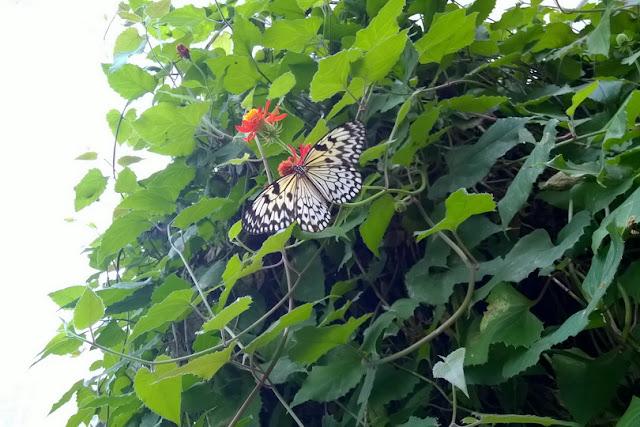 studiare insetti homeschooling