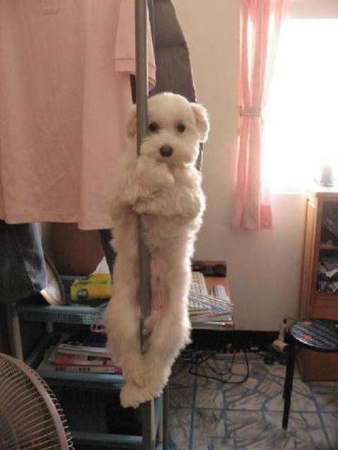 Chùm ảnh đáng yêu về 15 chú chó với công việc của mình