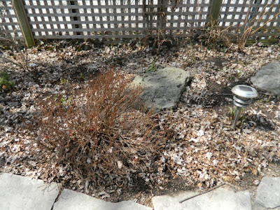 Leslieville Toronto Spring Back Yard Cleanup Before by Paul Jung Gardening Services--a Toronto Organic Gardener