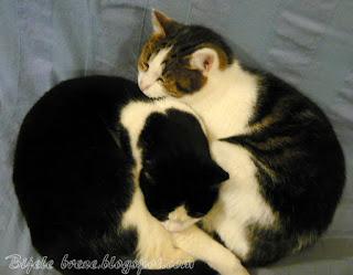 Trio fantastic - cats friends