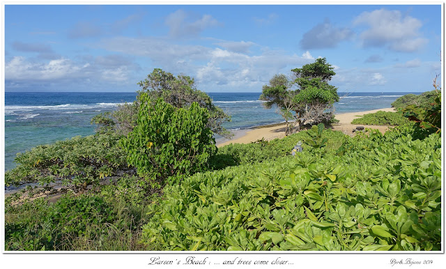 Larsen's Beach: ... and trees come closer...