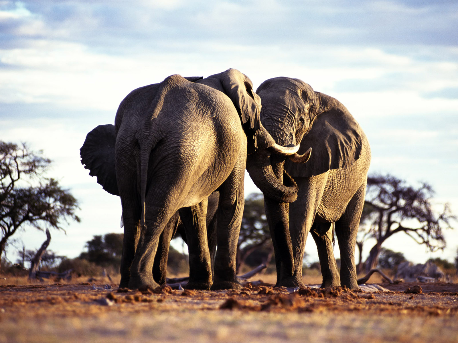 Wild Animals Names: HD Animals Wallpapers 4