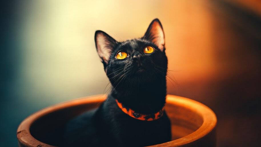 Black Cat, 8K, #4.574