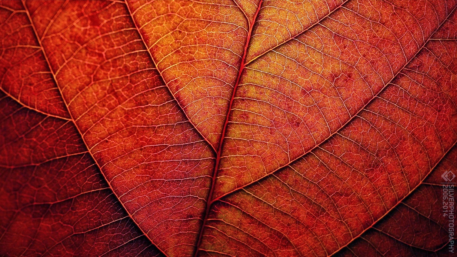 Wallpaper San Valentin 3d Texturas De Hojas Para Photoshop Fotos E Im 225 Genes En