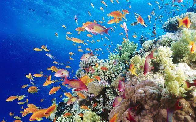Foto tropische vissen onderwater