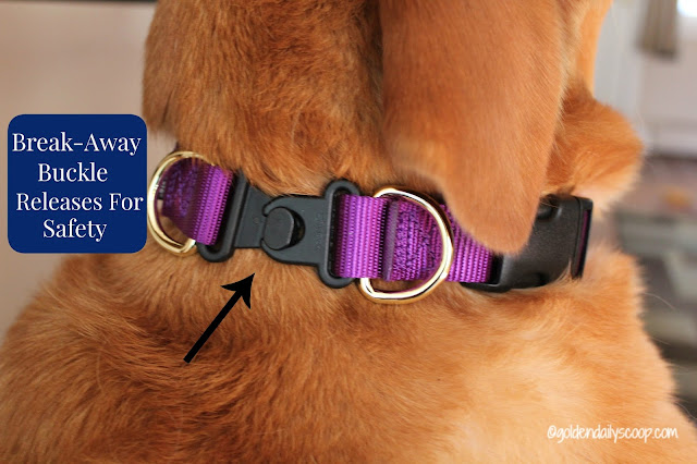 PetSafe break-away buckle for dog safety and awareness