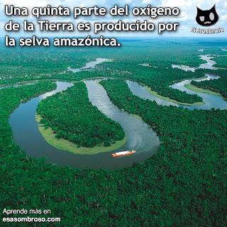 Más del 20% del oxígeno de la Tierra es producido por la selva amazónica.