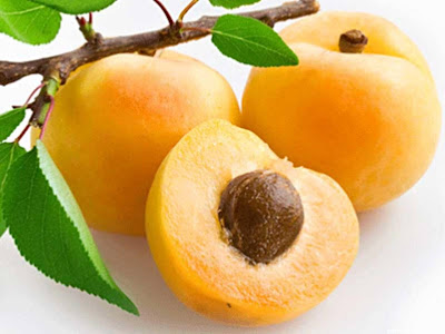 Apricot Fruit Definitions And Pictures