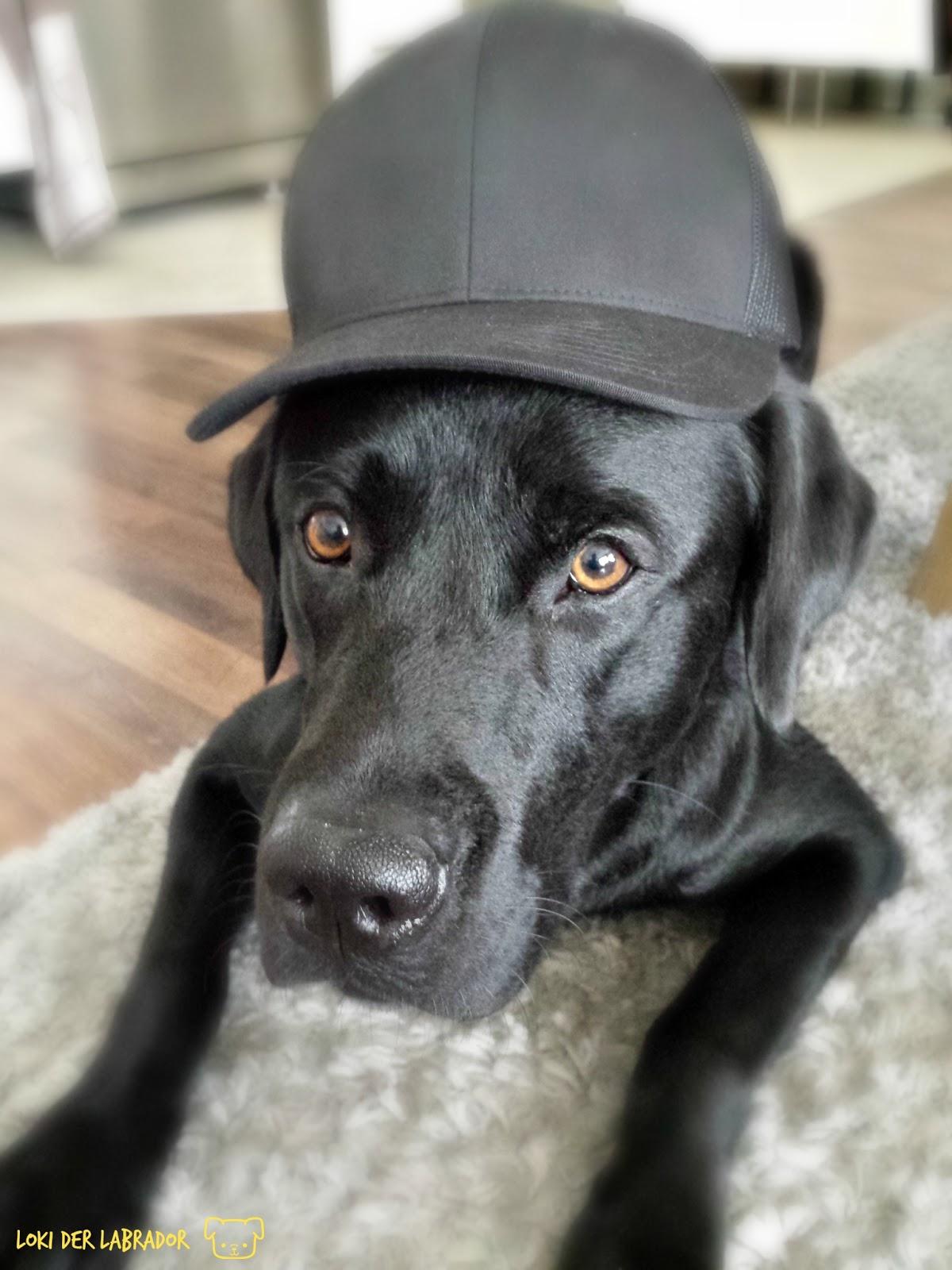 Schwarzer Hund mit Hut