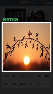 на фоне заходящего солнца растет обычная ветка