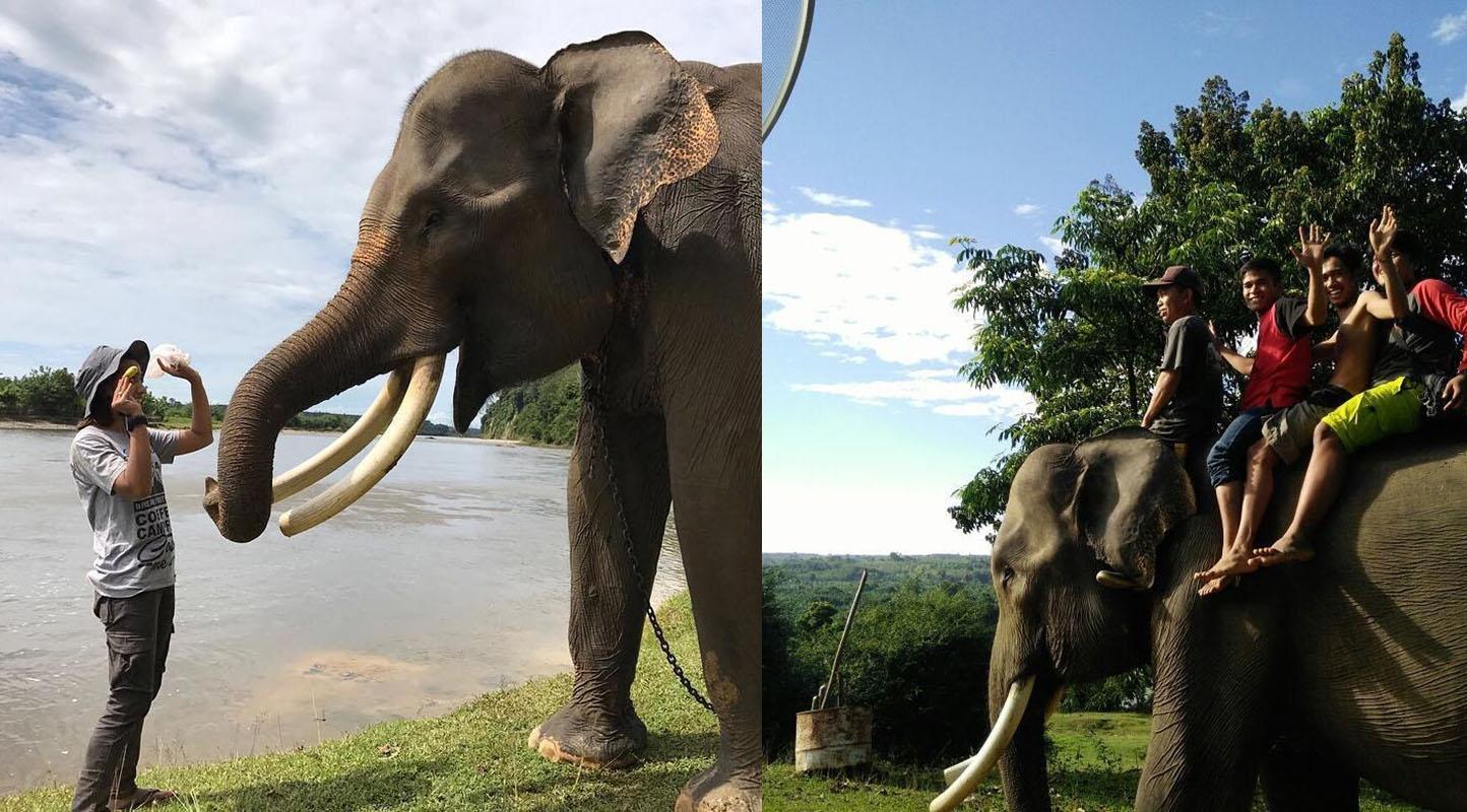 Pusat Pelatihan Gajah Seblat
