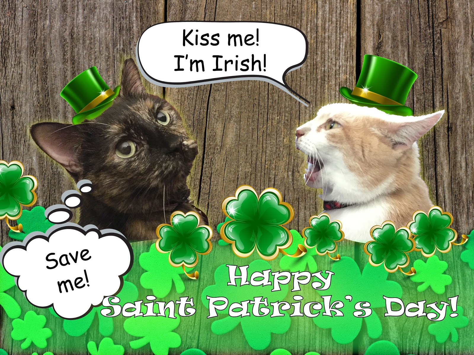Image result for st patrick cat pictures