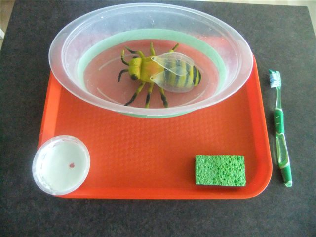 NAMC montessori preschool classroom activities learning about honeybees washing the bee