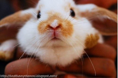 Cute and funny bunny.