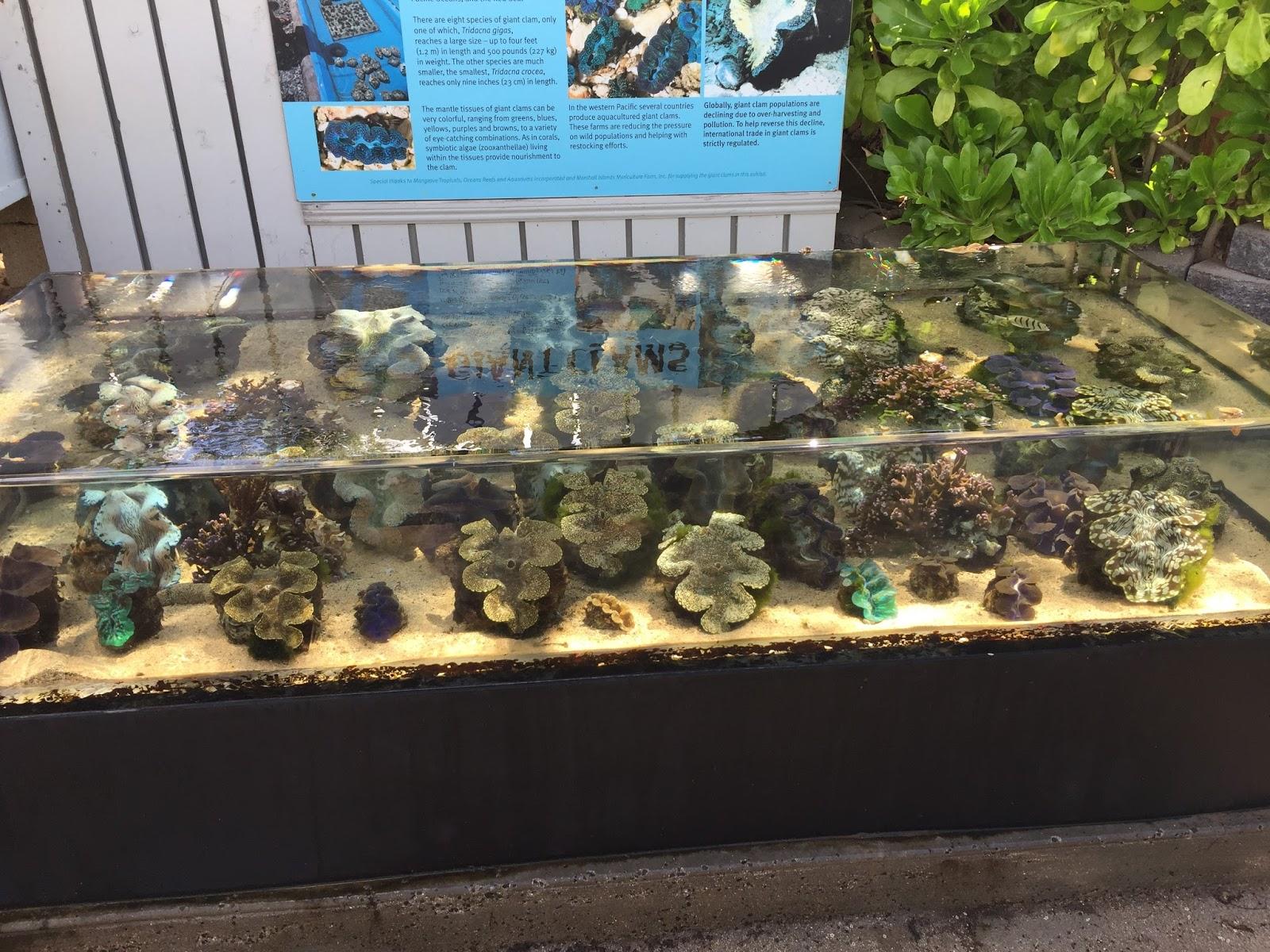 The Life Amphibious Earth Day 2017 At The Waikiki Aquarium
