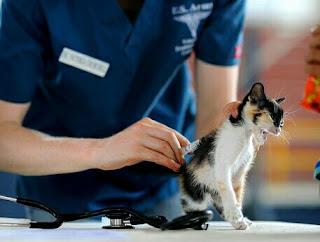 Cara Supaya Kucing Tidak Hamil