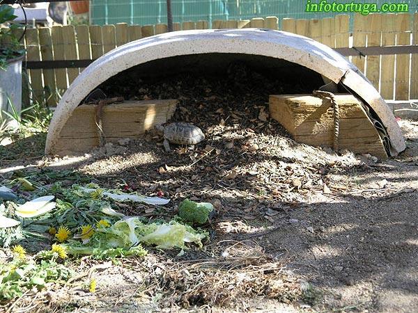 Infotortuga Instalaciones Para Tortugas Terrestres Testudo - Como-construir-un-estanque-para-tortugas
