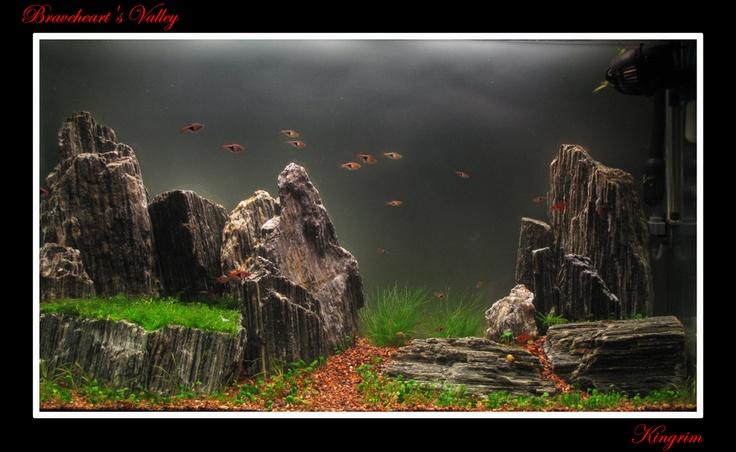 Bố cục núi đá cực kỳ đơn giản trong hồ thủy sinh