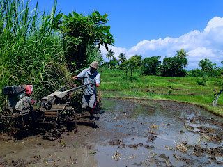 Land Preparation Agriculture Plowing Rice Field