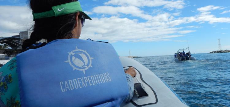 Avistamiento de ballenas, Cabo Expeditions, Los Cabos, temporada de ballenas, tours de avistamiento de ballenas, los cabos playas, los cabos que hacer,
