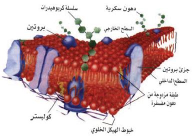 الغشاء الخلوي موسوعة العلوم