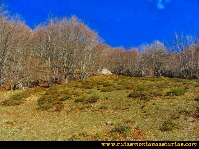 Ruta Requexón Valdunes, la Senda: Bajando de la Senda, saliendo del bosque