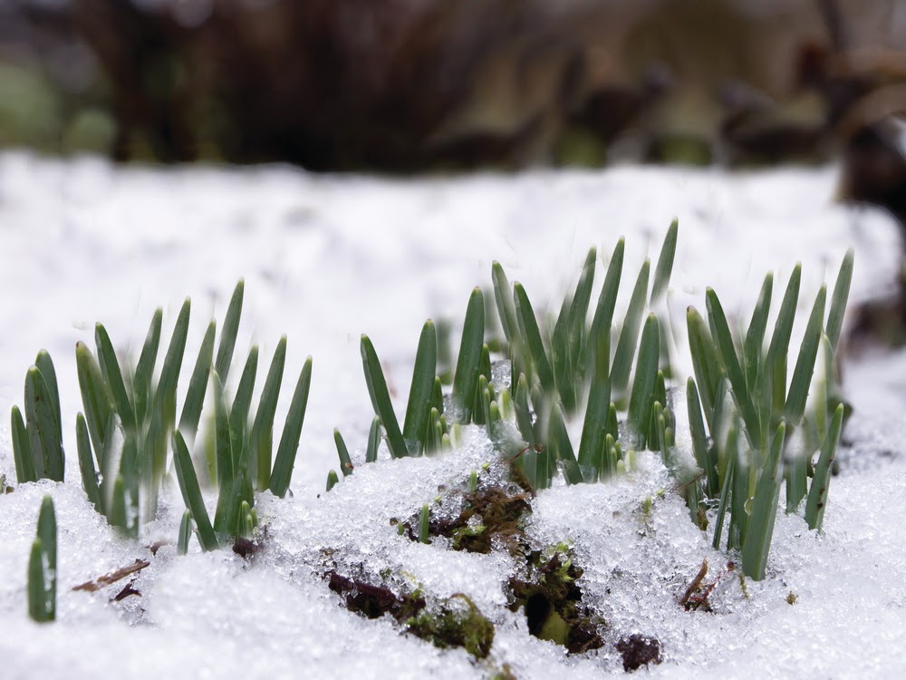 We Know What You Re Thinking There S Still Snow On The Ground For Many Of Weather Is Cold And Cloudy It Way Too Early To Think About Lawn Care