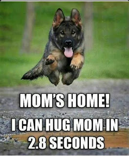 Dog Humor : Mom's Home...