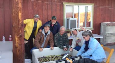 "<img src=""2017 olive harvest.jpg"" alt=""neighbors help sort the olives for harvest"">"