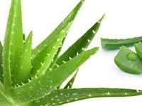 एलोवेरा जूस बनाने की विधि और 10 फायदे, (Aloe vera juice recipe)