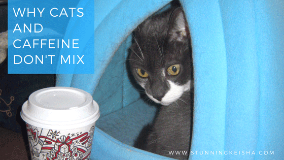 Why Cats and Caffeine Don't Mix