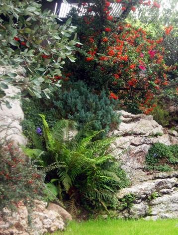 rincón del jardín con pyracanta