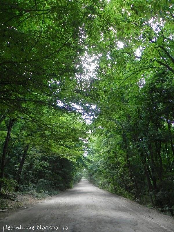 Drumul prin padurea Comana