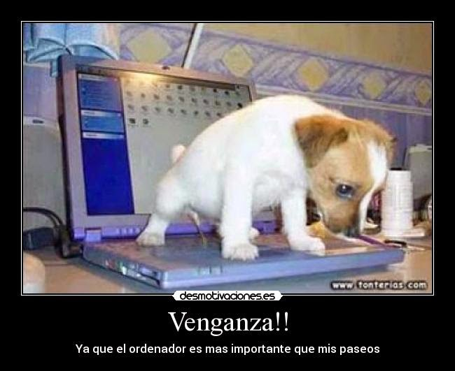 Humor Video de fotos chistosas Animales chistosos Riete