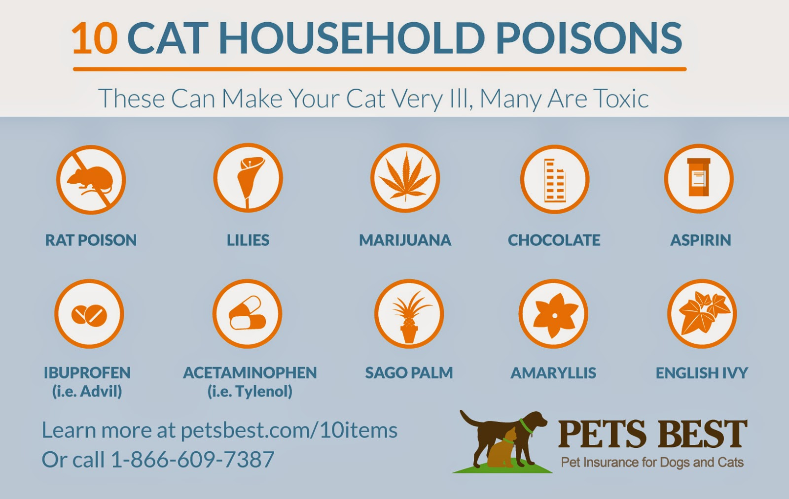 10 Household Items That Are Poisonous To Cats